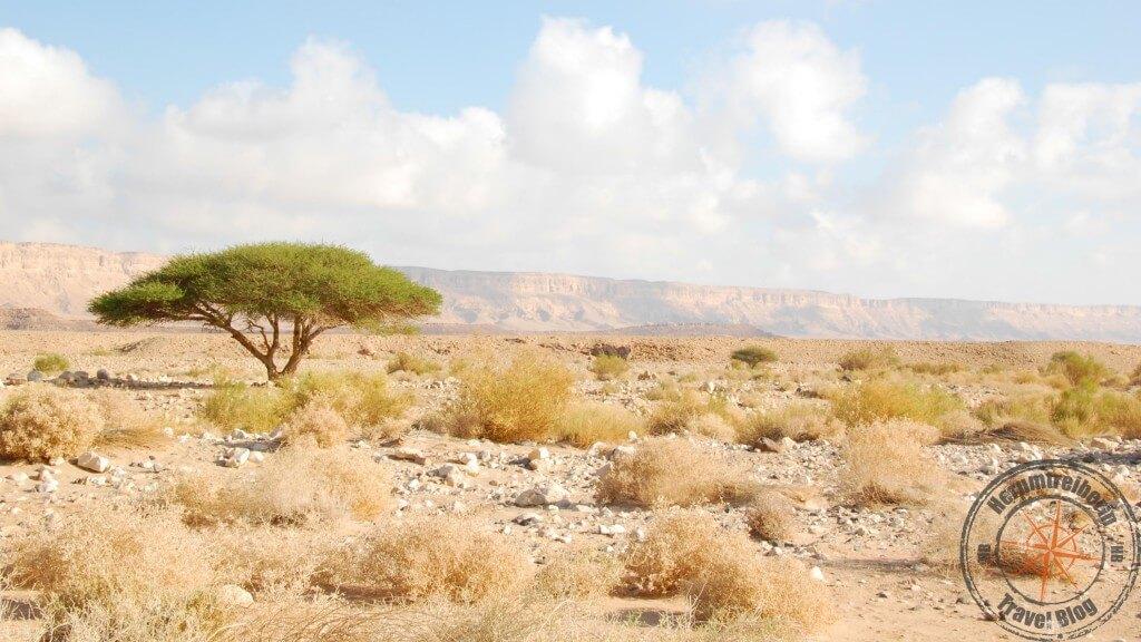 Israel Makhtesh Ramon-Krater Akazie