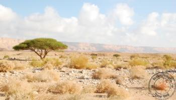 Israel Makhtesh Ramon Crater